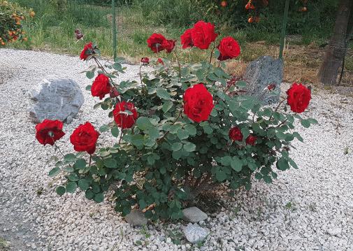 villa valentina b&b taormina giardino rose