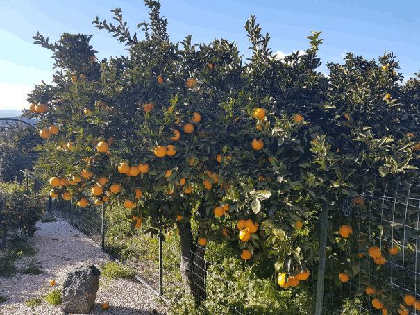 b&b villa valentina taormina giardino arance